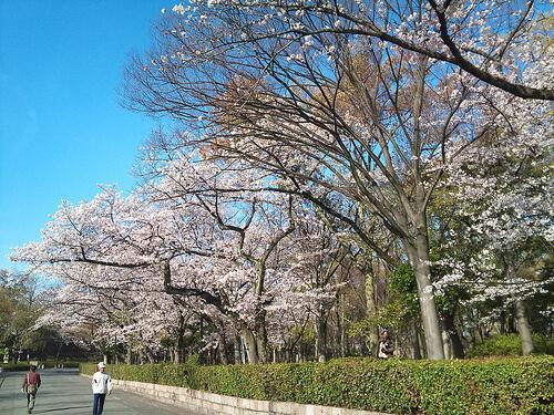 大阪城の公園